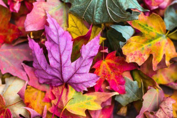 Frunze colorate – un joc simplu